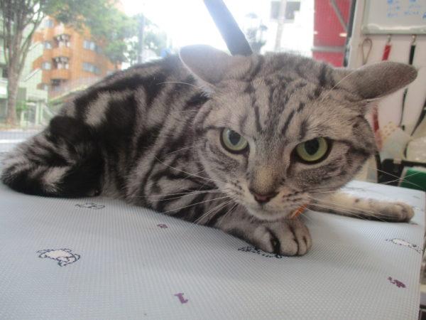 橋口ゆきちゃん 猫