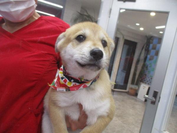 堤リクちゃん MIX犬