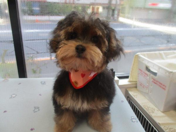 木下プリッツちゃん MIX犬